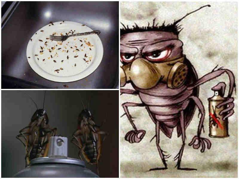 Куда делись тараканы: почему они исчезли и куда ушли?   funfeel
