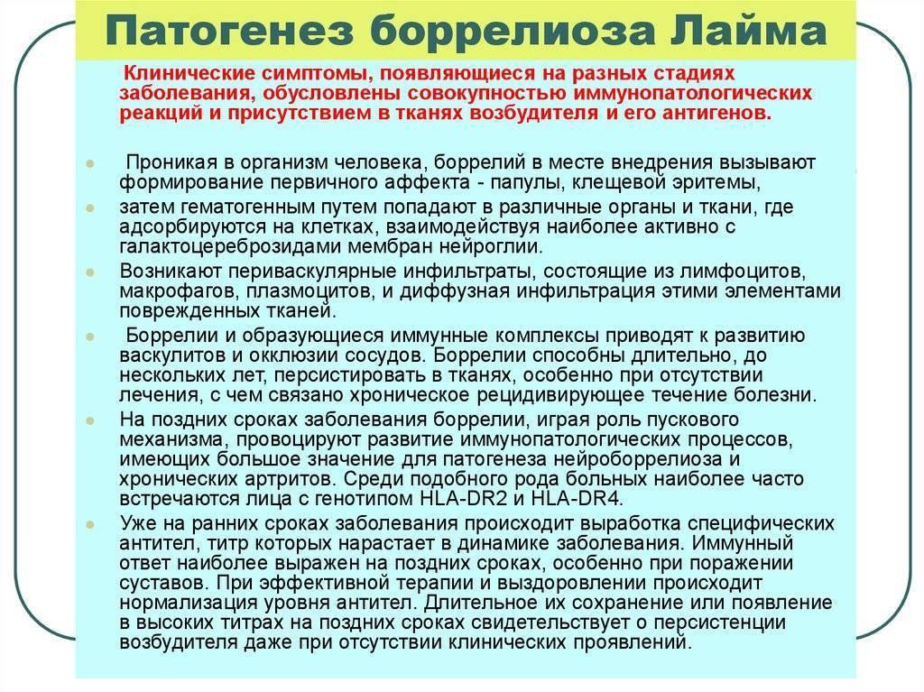 Клещевой боррелиоз (болезнь лайма)— симптомы, лечение и последствия боррелиоза