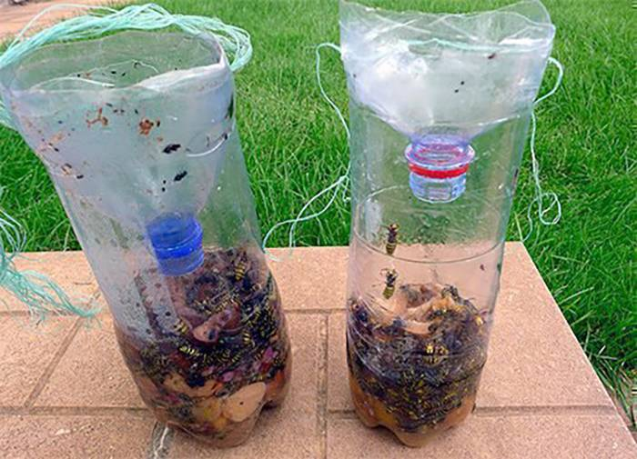 Разновидности ловушек для ос: как сделать ловушку для ос из бутылки