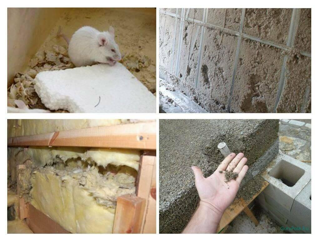 В каком утеплителе не заводятся мыши: обзор материалов, чем обработать