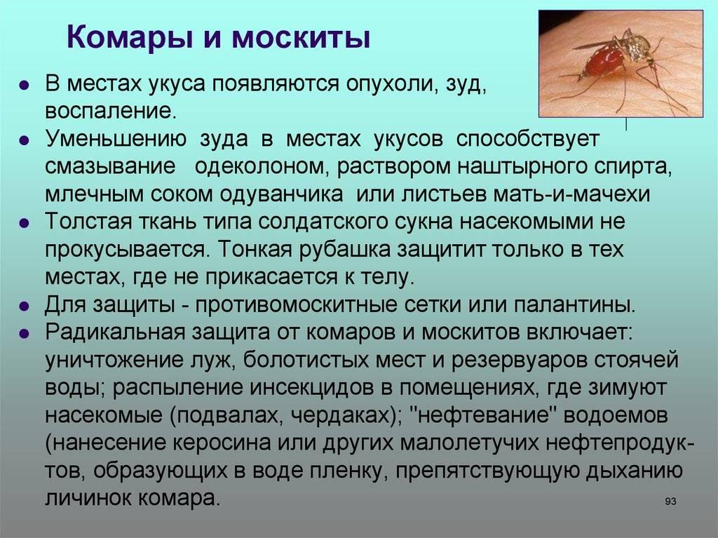 Опасные насекомые: берегись комара и москита!