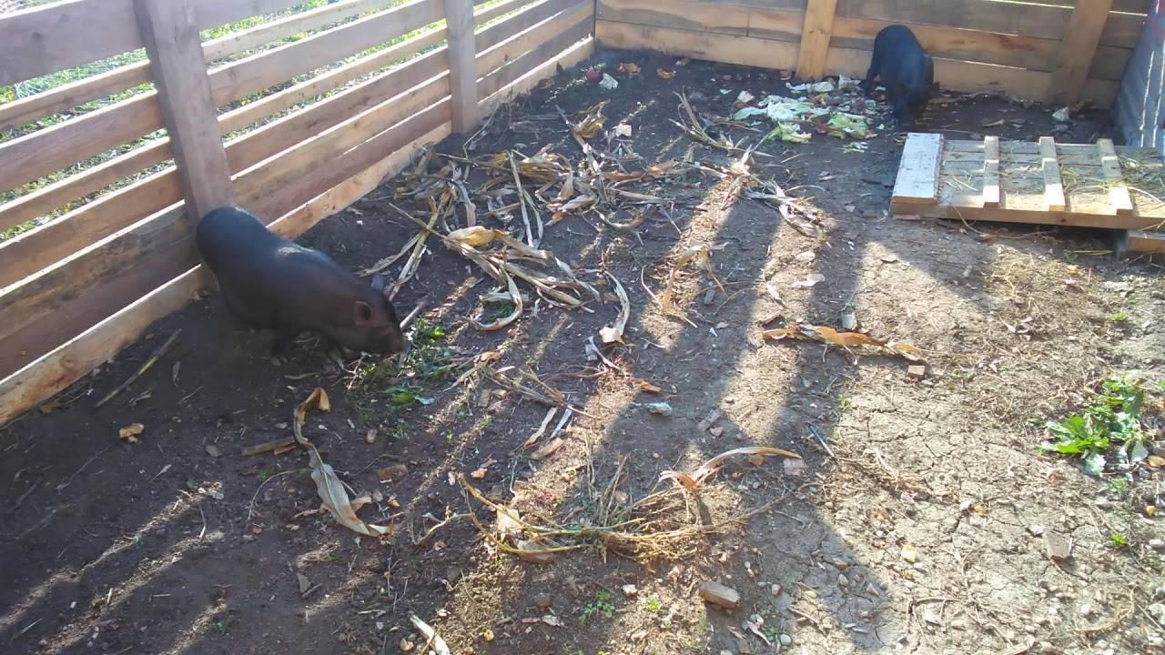 Как избавиться от крыс и мышей в курятнике - способы и советы