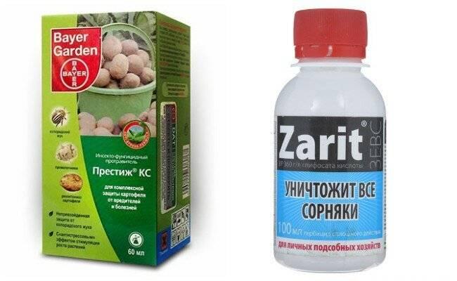 Самые эффективные средства от колорадского жука :: sotkiradosti.ru