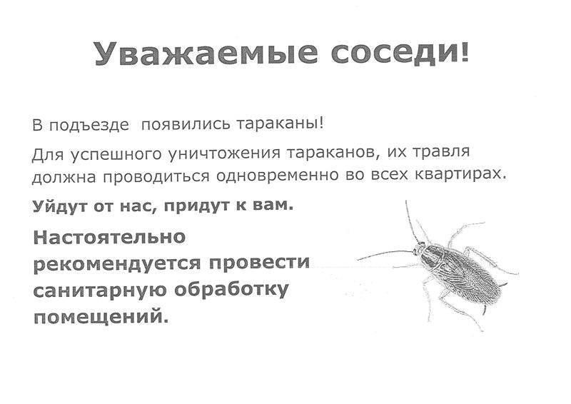 Если лезут тараканы от соседей: что делать и куда обратиться с жалобой