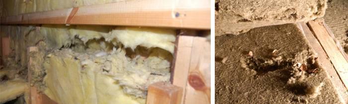 Мыши в каркасном доме - как бороться и защитить дом