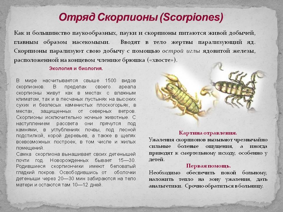 Муха скорпионница: опасность для человека