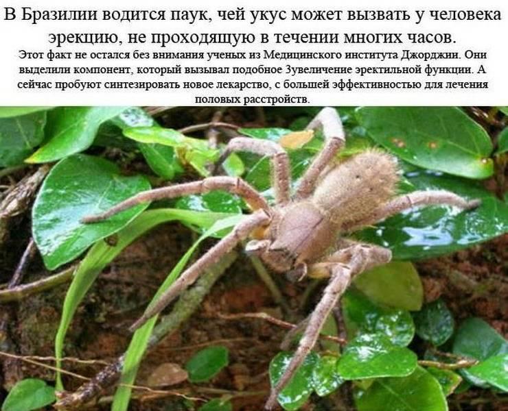 Укус паука: последствия и что делать при паучьем укусе