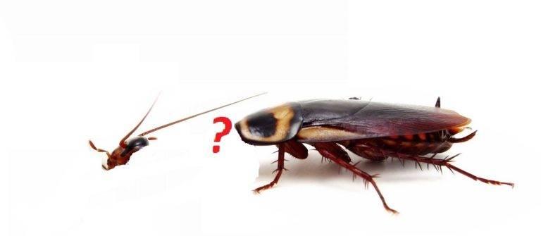 Сколько живут тараканы без еды и воды в квартире