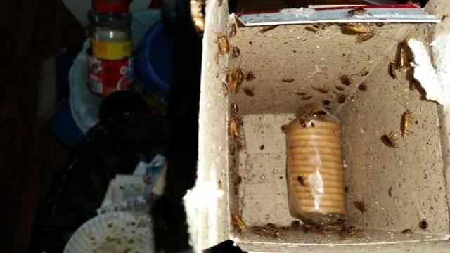 Гнездо тараканов: где и как найти его в квартире
