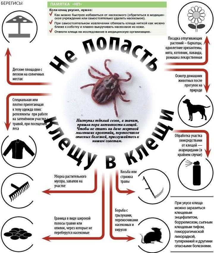 Как защититься от энцефалитных клещей и как избежать укуса клеща в лесу