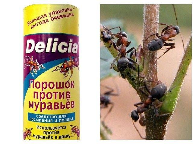 5 способов избавиться от рыжих муравьев навсегда в домашних условиях