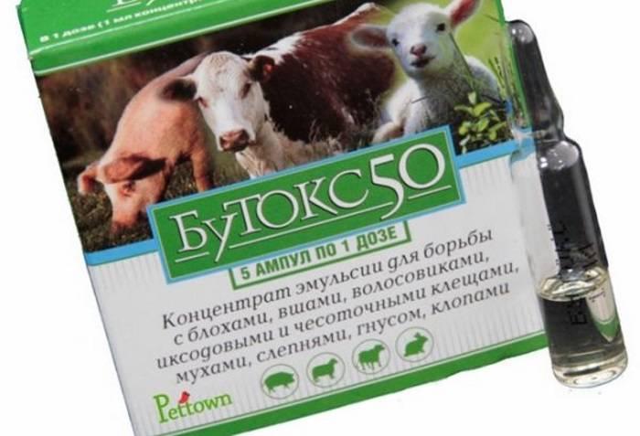 Лишай у коров: как и чем лечить, симптомы и причины