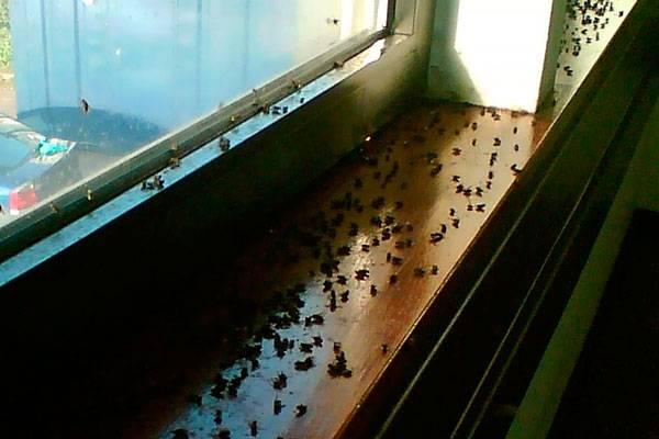Как бороться с мухами на даче - средства и способы