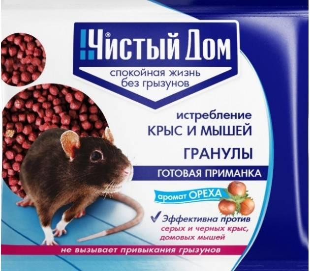 Борьба с крысами и мышами – контрольный список, что делать