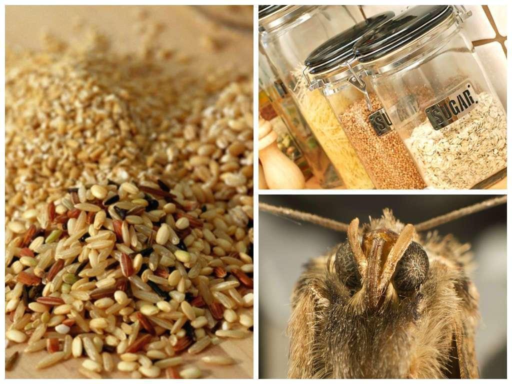 Как избавиться от пищевой моли в крупах: эффективная борьба народными средствами