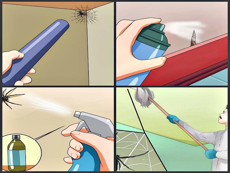 Как бороться с пауками в доме
