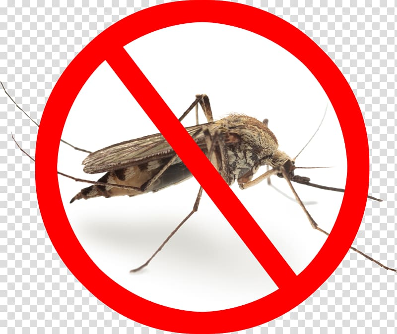 Комары – сонник растолкует этот знак