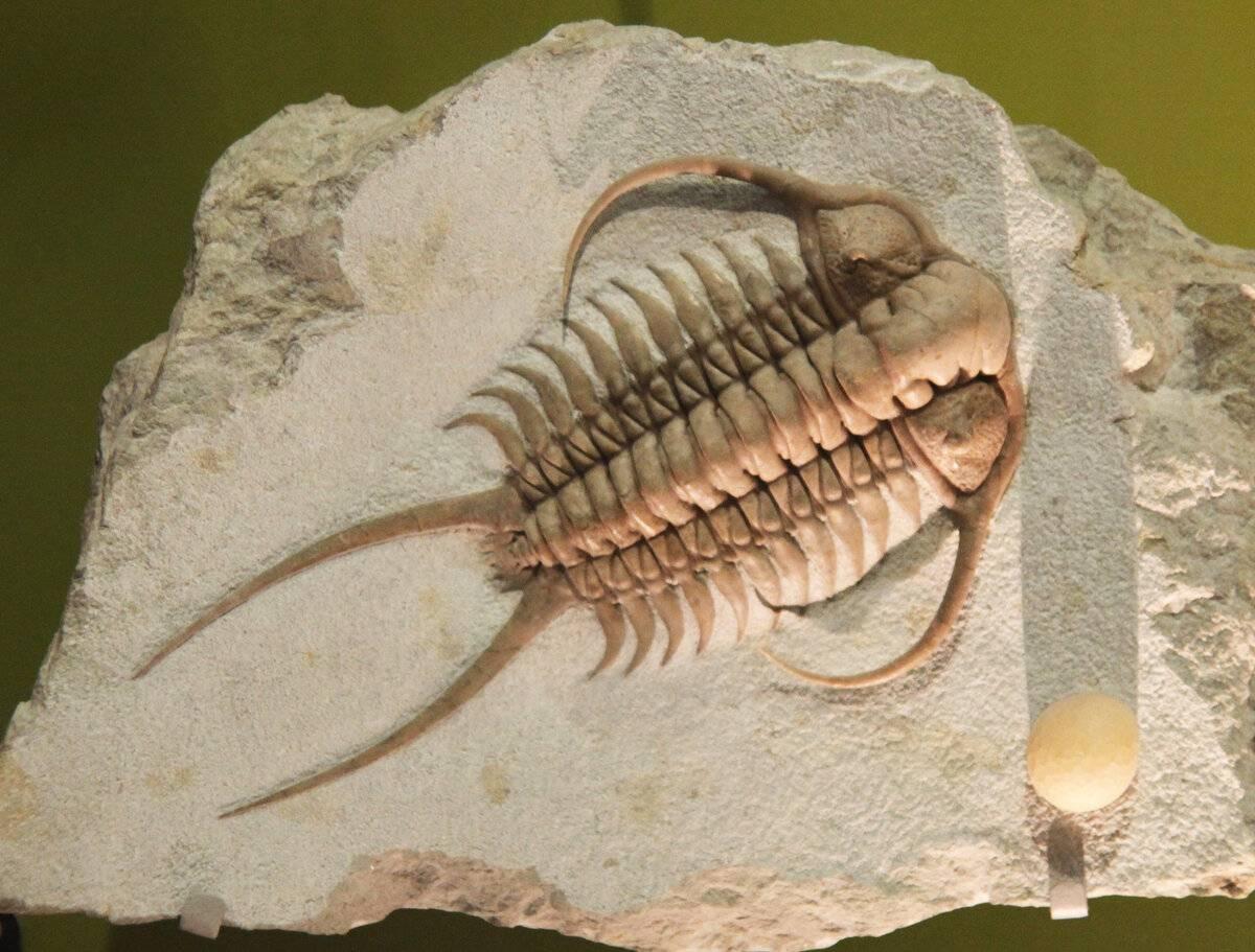 Удивительные доисторические существа, которые существуют до сих пор