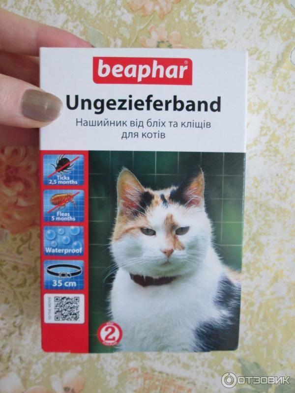 Ошейник от блох и клещей для кошек: как правильно выбрать - kot-pes