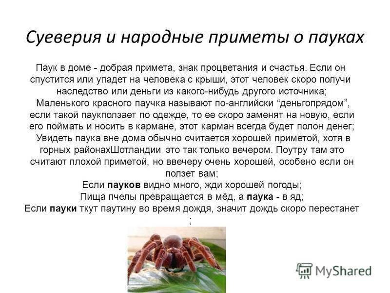 К чему пауки везде встречаются. приметы увидеть паука.