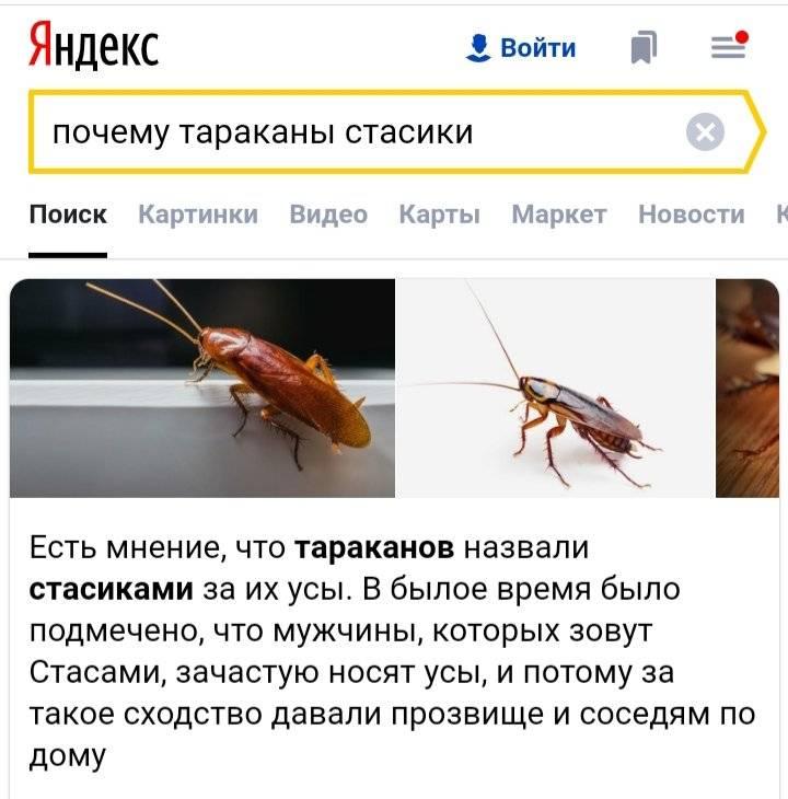 Интересные прозвища тараканов: стасики, тарасики, прусаки.