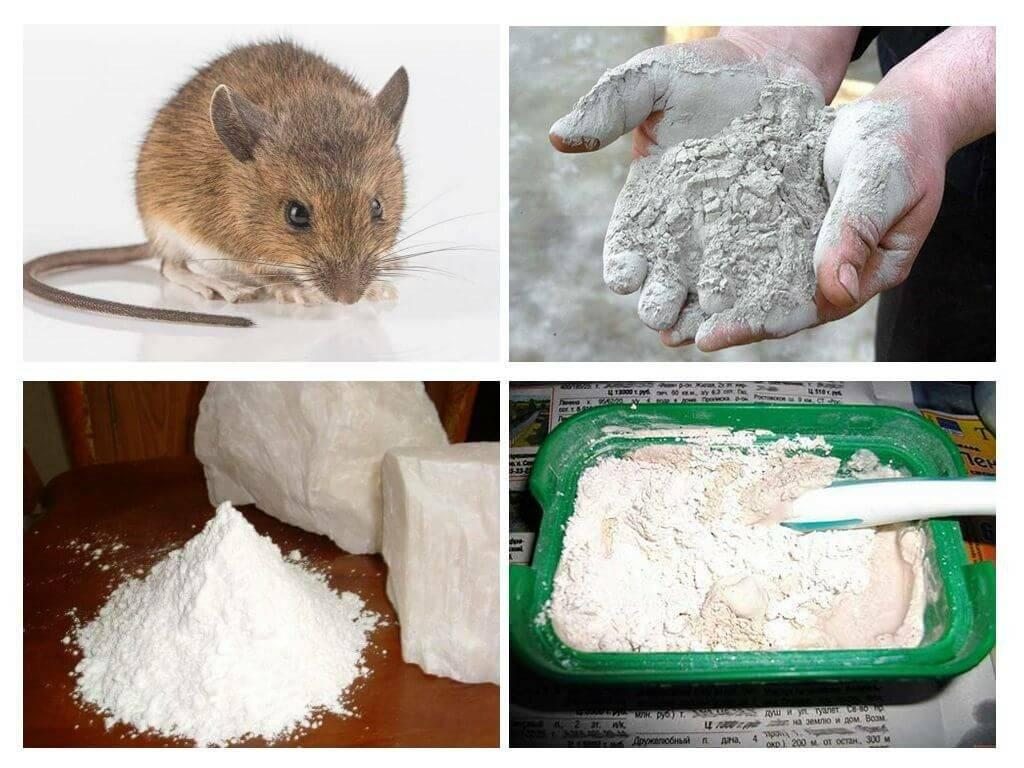 Стойкий мышиный запах и эффективные способы его устранения
