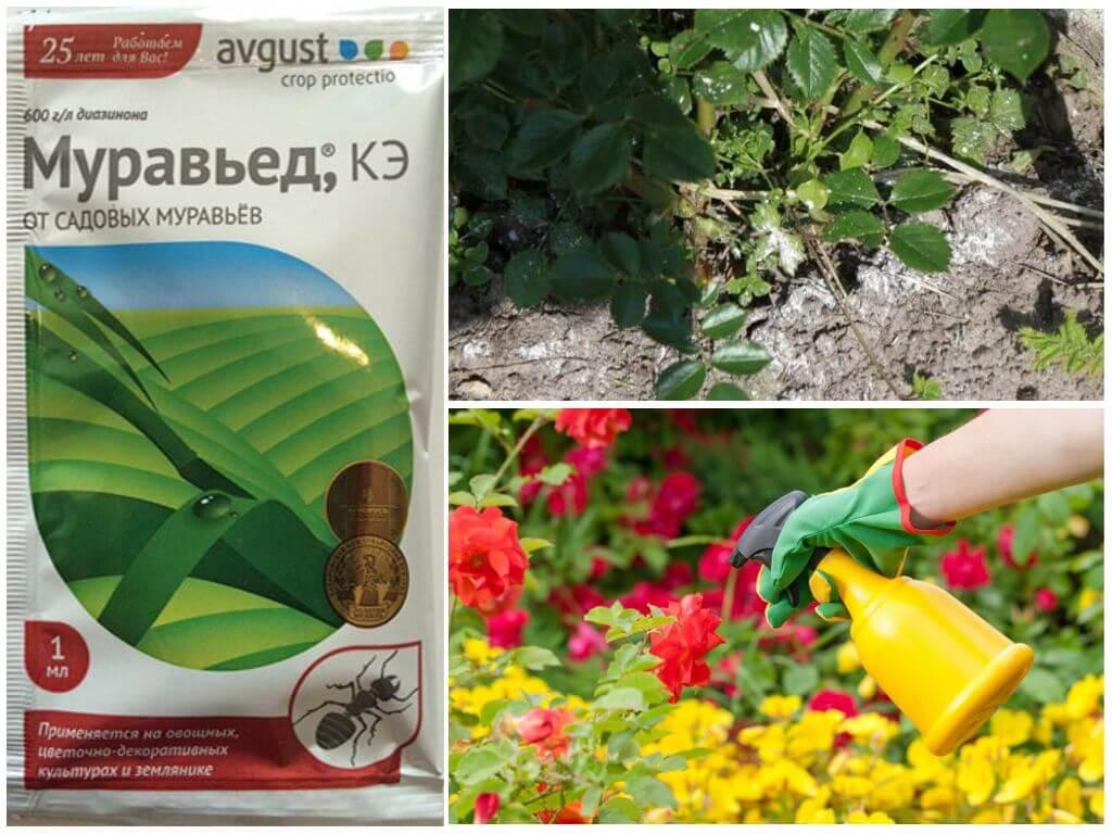 Средство муравьед от садовых муравьев: инструкция, цена и эффективность / как избавится от насекомых в квартире