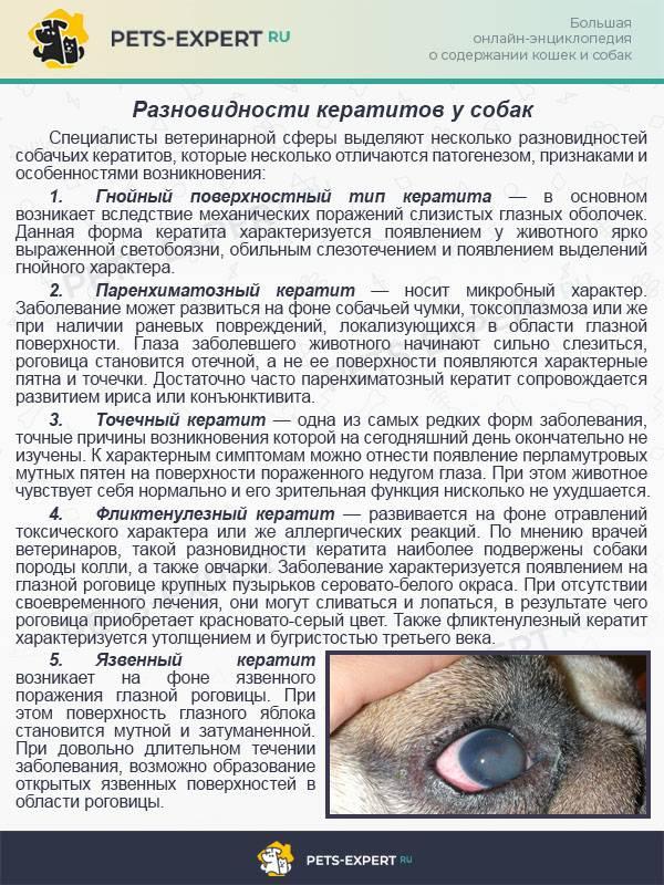 Пироплазмоз у кошек: симптомы и лечение   болеют ли, причины
