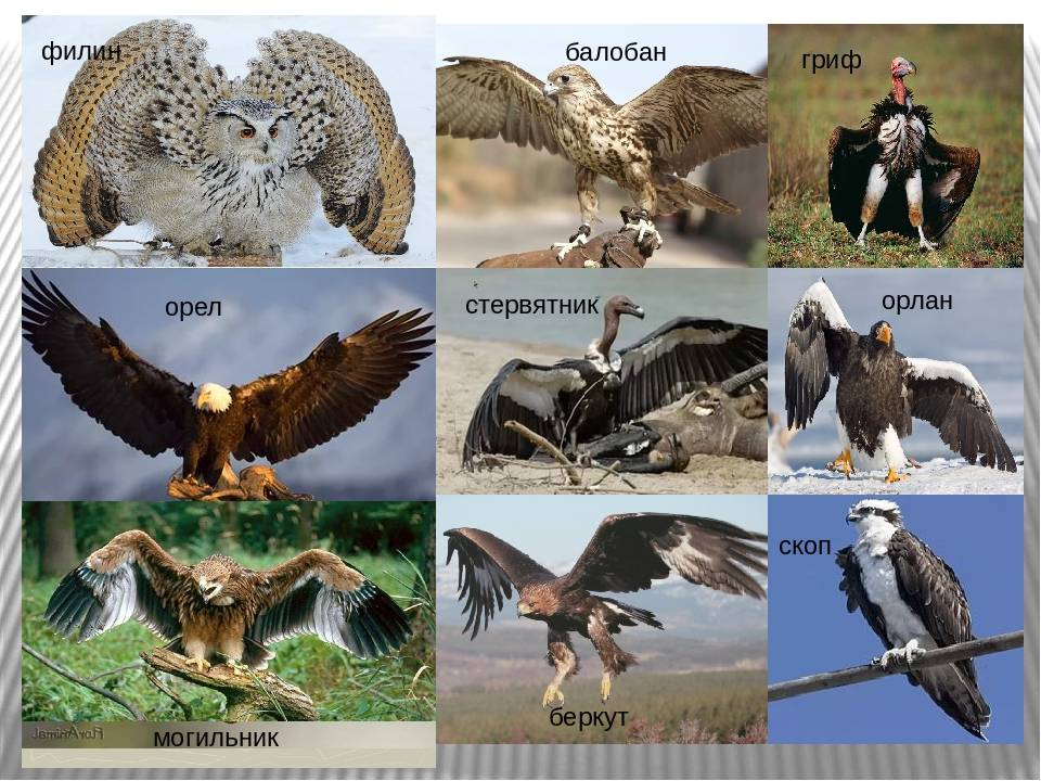 Какие есть грызуны: список диких полевых и степных видов животных