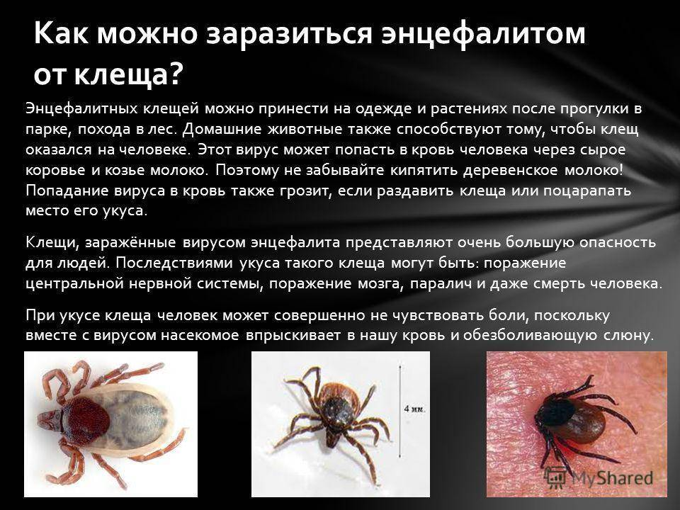 Как выглядит и чем опасен укус клеща, код мкб 10