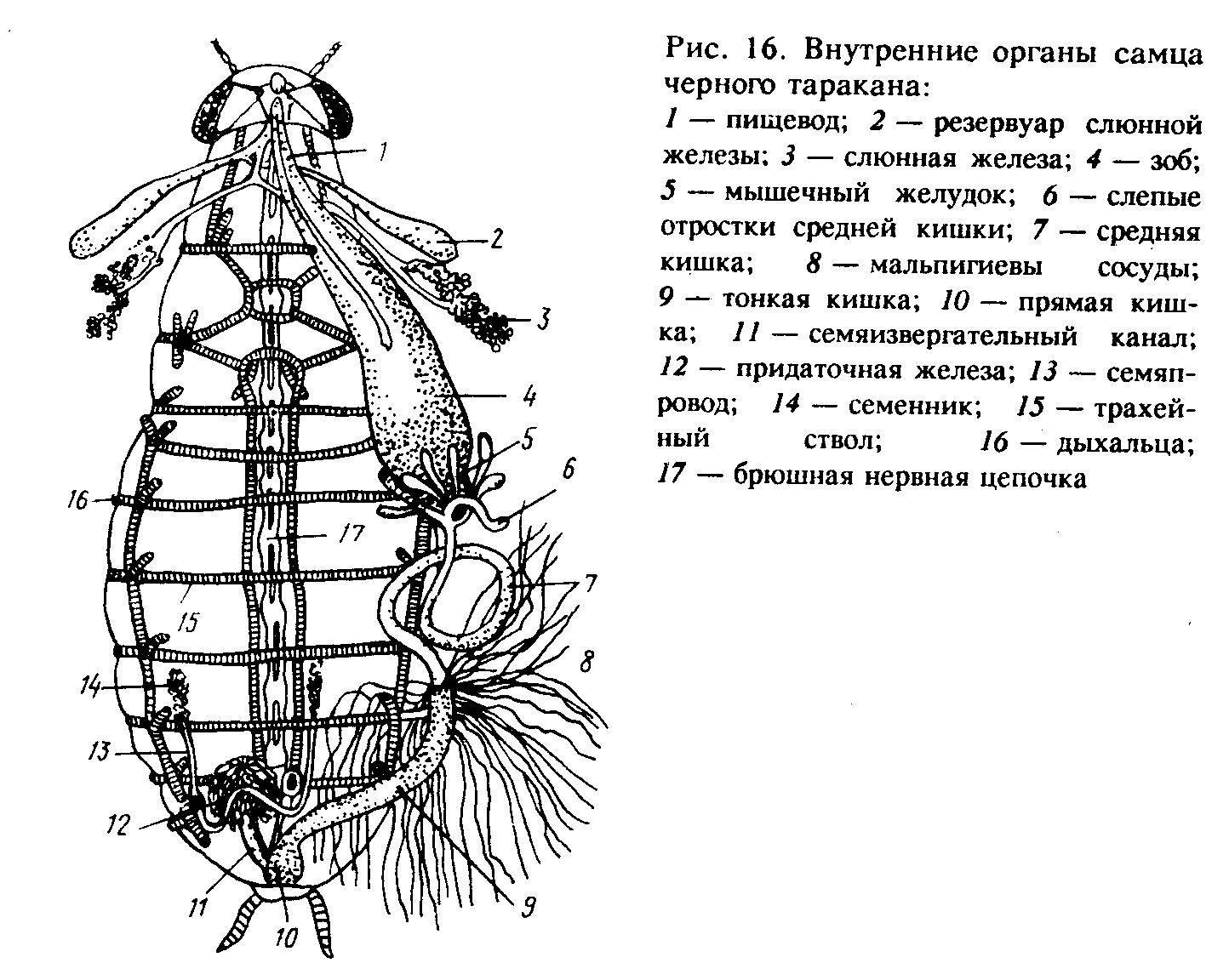 Зачем нужны тараканы в природе