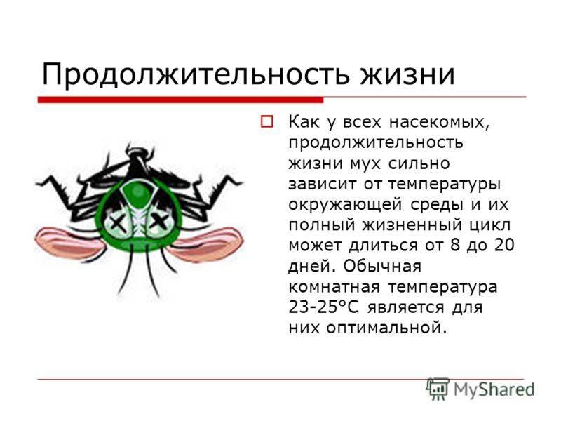 Почему мухи трут лапки и что это им даёт?