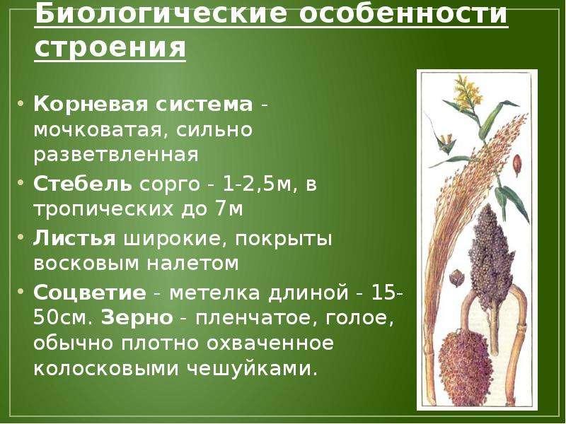 Акомис: содержание иглистой мыши дома