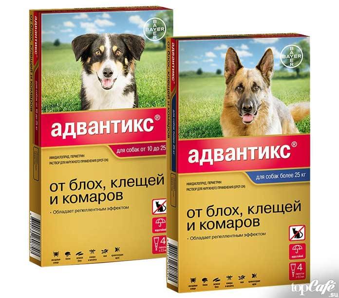 Капли на холку от блох и клещей для собак и кошек - виды, какие лучше выбрать, отзывы | comp-plus.ru