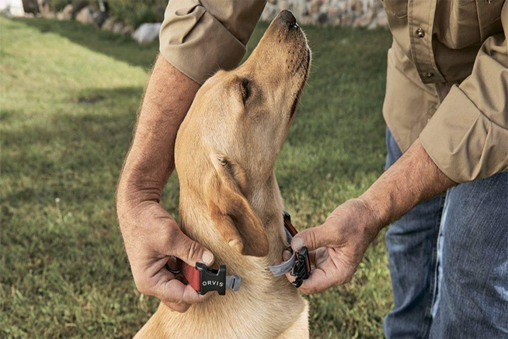 Как защитить собаку от клеща на природе - способы и средства защиты