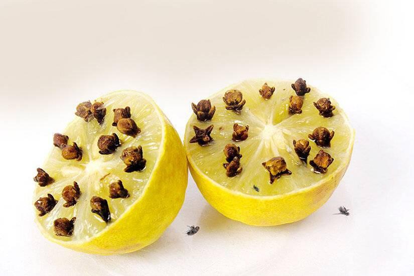 Апельсин (лимон) с гвоздикой от комаров, рецепты, отзывы, помогает ли