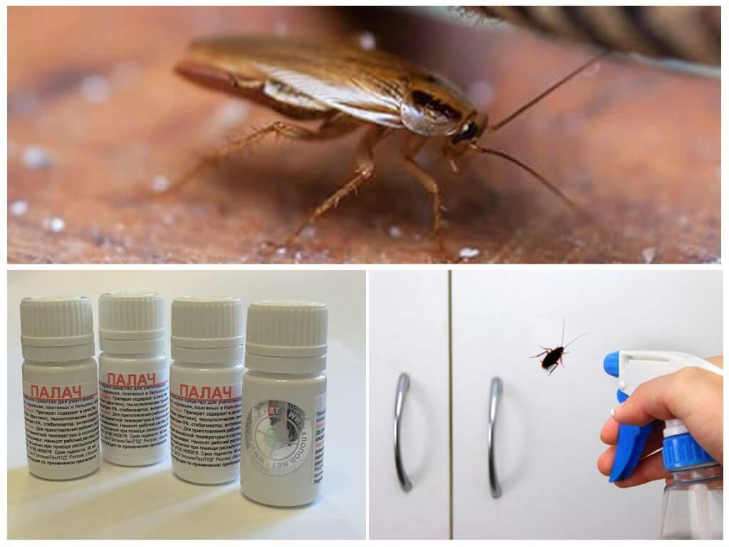 Как избавиться от тараканов народными средствами, проверенные рецепты