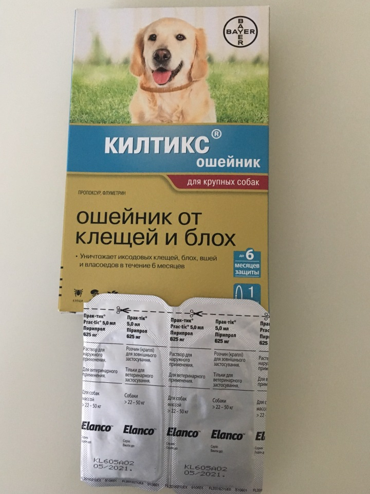 Всё о вакцинации собак   сайт о маленьких собачках и не только