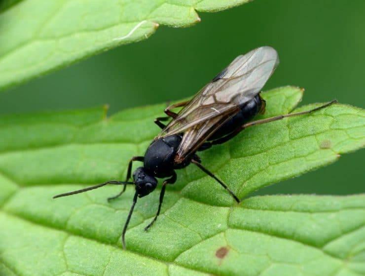 К чему появляются муравьи в доме - главные приметы, стоит ли избавляться от насекомых