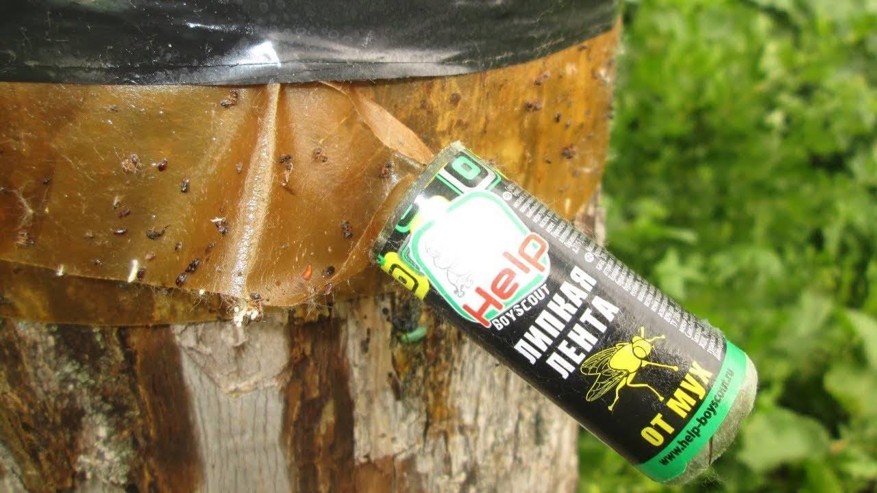 Дешево, но эффективно: ловушки от муравьев своими руками