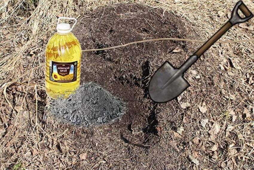 Как избавиться от домашних муравьёв - лайфхакер