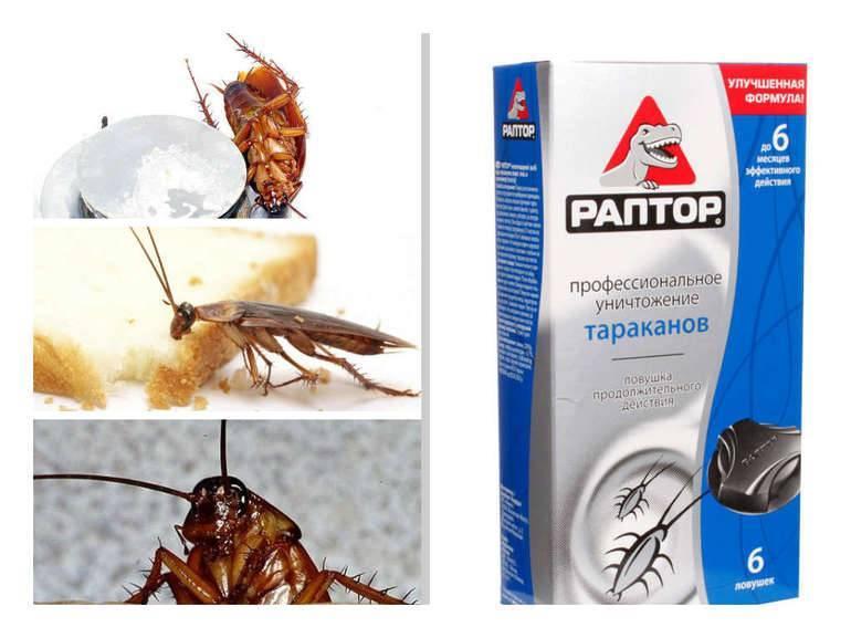 20 самых эффективных средств от тараканов в квартире (народные, покупные)