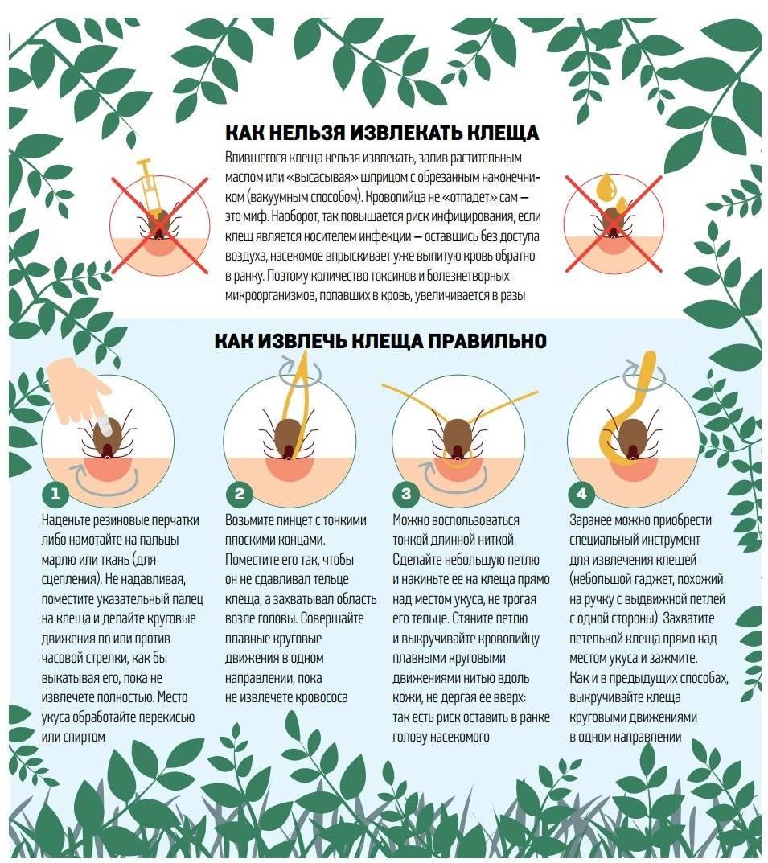 Как вытащить клеща в домашних условиях у человека – womanistka.ru