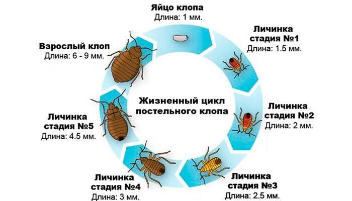 Про «дезинфекцию» от тараканов и важные правила ее проведения в квартире - сэс