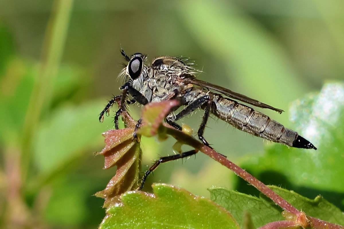 Насекомые против насекомых [1969 панфилов д.в. - в мире насекомых]