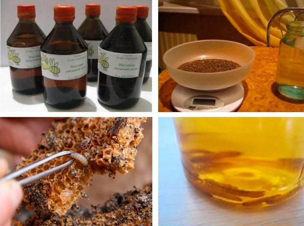 Приготовление спиртовой настойки восковой моли в домашних условиях и что можно излечить