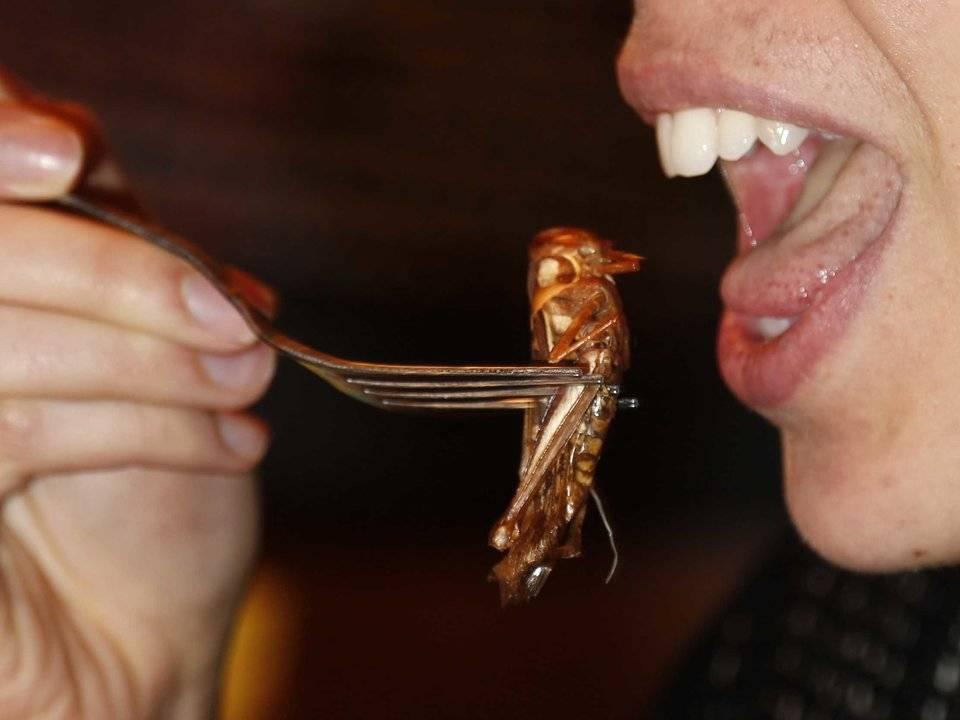 Приманка для тараканов из чего закатить последний пир