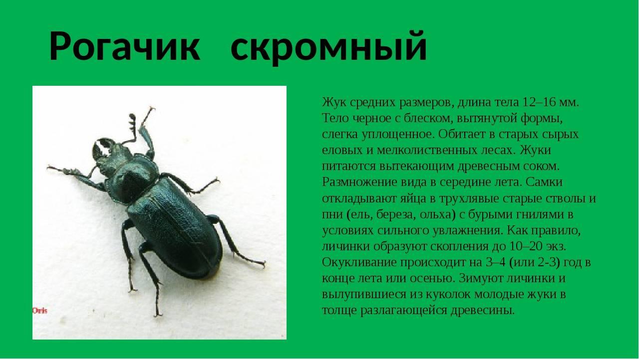 Жук-дровосек: происхождение, описание усачей, разновидности насекомых с длинными усами, их названия и фото, жизненный цикл, охрана, размножение, враги, уничтожение