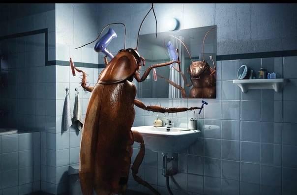Чего боятся тараканы в квартире — топ10