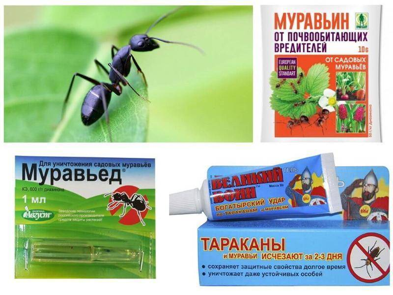 Избавиться простыми средствами от муравьев на цветах